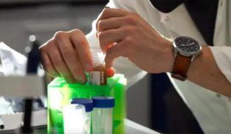 Tek kullanımlık plastikler için 'vegan örümcek ağı' alternatifi – Teknoloji Haberleri